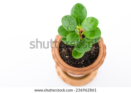 Baby plant in small flower pot. Isolated on white background. Space for text - stock photo