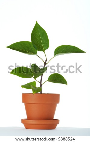 Baby plant in small flower pot. Isolated on white background. Space for text. - stock photo