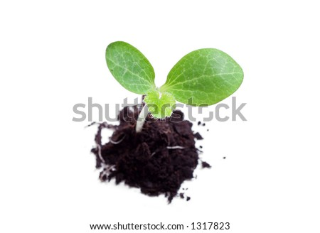 Baby plant in soil - stock photo