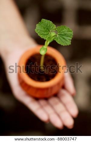 Baby plant-New life - stock photo