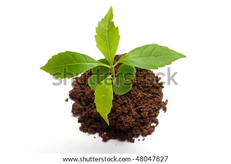 Baby plant on white - stock photo