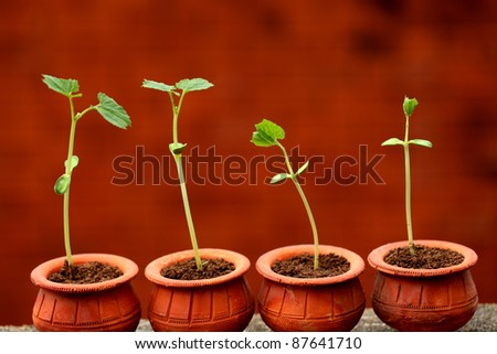 Baby plants growing from soil-New life - stock photo