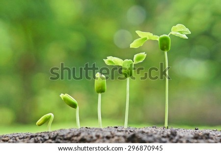 baby plants growing in germination sequence on fertile soil with natural green background - stock photo
