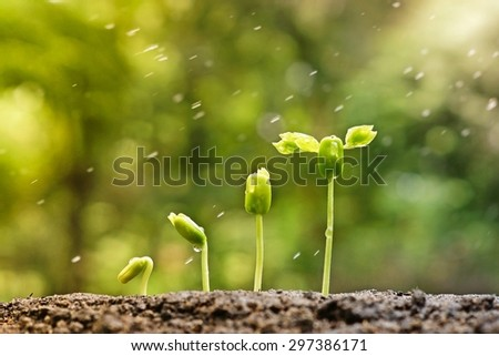 baby plants growing in germination sequence on fertile soil with natural green background and rain drops - stock photo