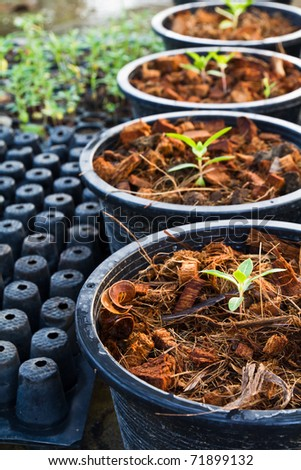 Baby plants in pot in nursery shelter - stock photo
