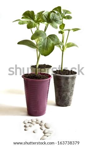 Baby plants-New life - stock photo