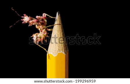 Baby Praying Mantis insect on a pencil against a black background - stock photo