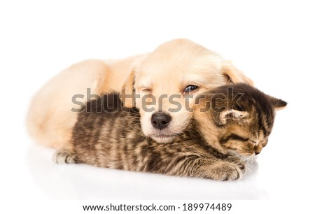 baby puppy dog and little kitten sleeping together. isolated on white background - stock photo