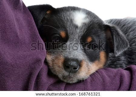 baby puppy laying on a blanket