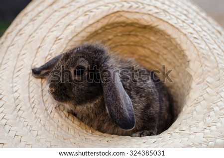 baby rabbit animal in hat