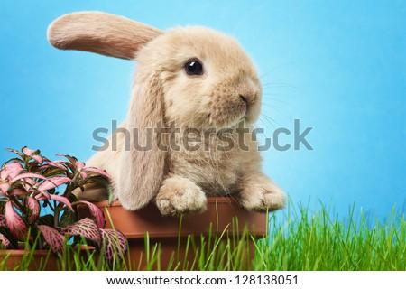 Baby rabbit in grass - stock photo