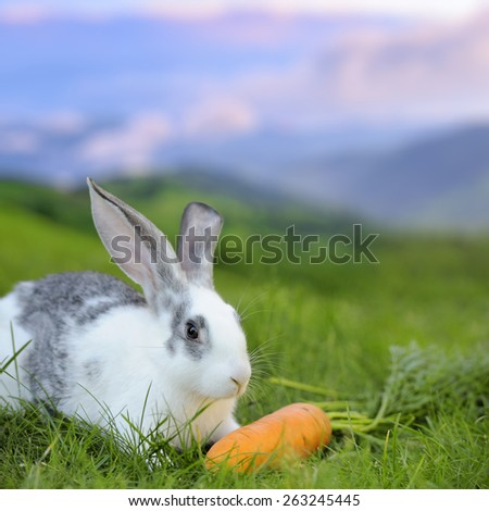 Baby rabbit in grass on meadow. Summer day