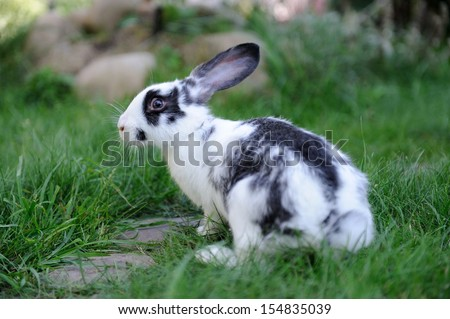 Baby rabbit in grass. Summer day - stock photo
