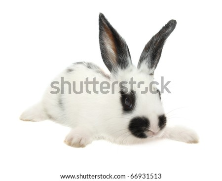 Baby rabbit isolated on white background