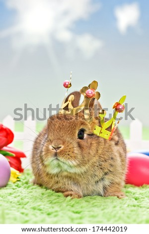 baby rabbit with golden crown