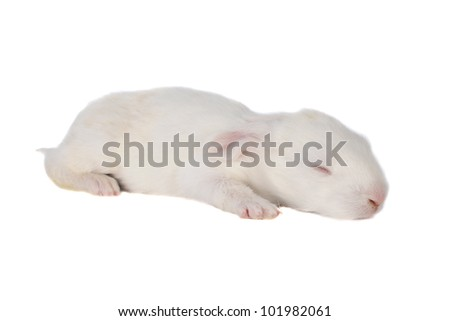 baby small on a white background