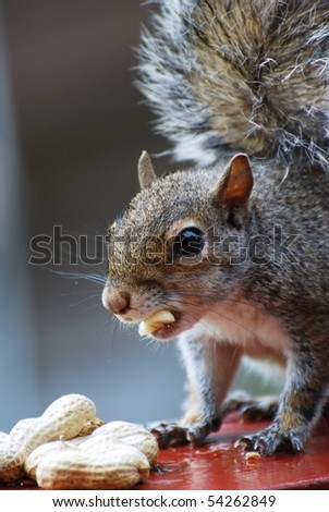 Baby Squirrel Eating in Rain - stock photo