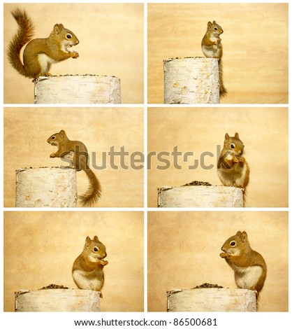Baby squirrel happily munching on sunflower seeds in the autumn, collage. - stock photo