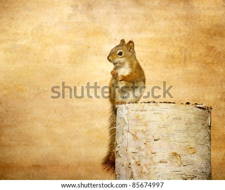 Baby squirrel on a birch log enjoying some sunflower seeds in the autumn with copy space.