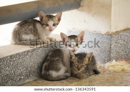 Baby stray cats - stock photo