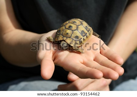Baby turtle, Testudo hermanni, on a girl's hand - stock photo