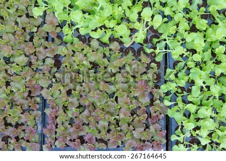 Baby Vegetables ,Potted seedlings growing in peat moss pots - stock photo