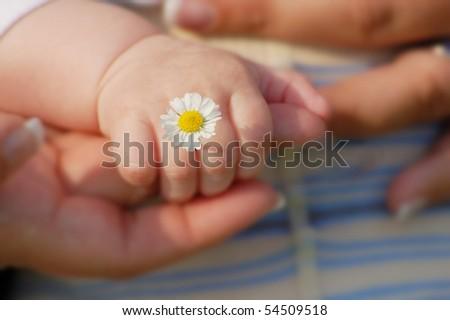 Babyhand with daisy - stock photo