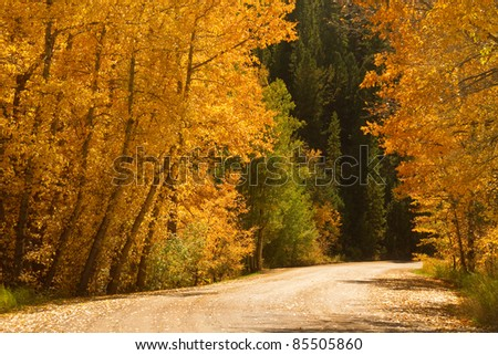 Back country road with colorful autumn aspen trees. - stock photo