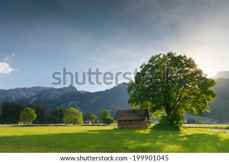 back light of sun with linden tree and hut at tyrolean alp meadow - stock photo
