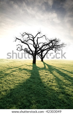 Back lit bare apple trees on a field with hoar frost - stock photo