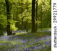 Back lit trees and bluebells in the Spring - stock photo