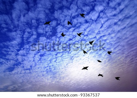 Back of bird flying over dramatic sky. - stock photo