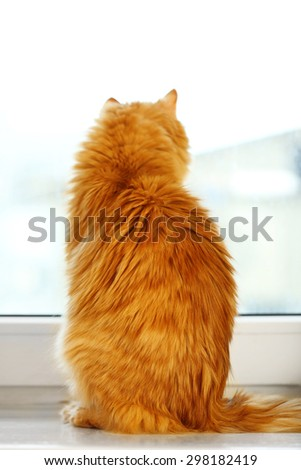 Back of red cat sitting on windowsill background - stock photo