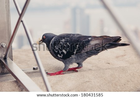 Back of the dove on the roof - stock photo