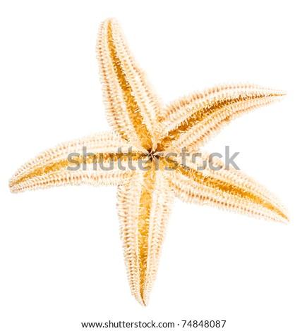 Back side of starfish  isolated on white background - stock photo