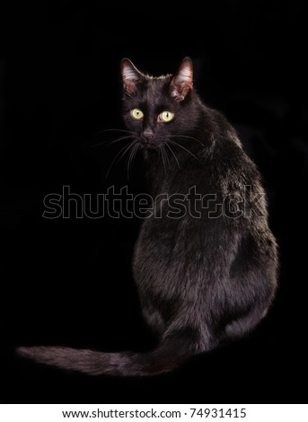 Back view of black cat sitting on black background with face turned to the viewer - stock photo