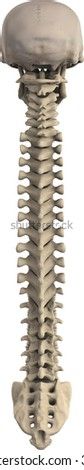 back view of 3d skull and spine - stock photo
