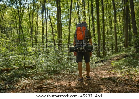 back view of male hiker on forest road