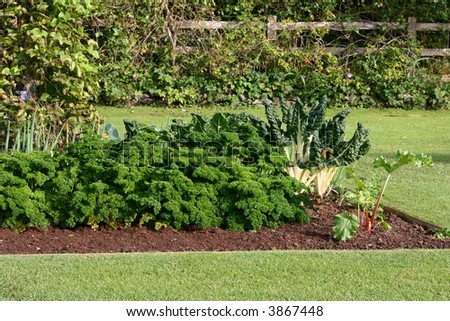 Back yard fresh vegetable and herb garden