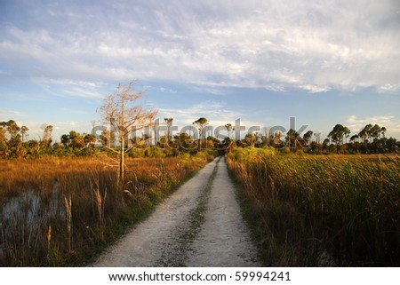 Backcountry Buggy Trail through the Everglades - stock photo