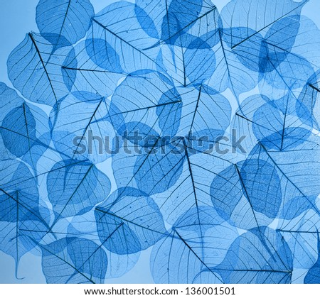 backdrop texture of colorful blue floral leaves - stock photo