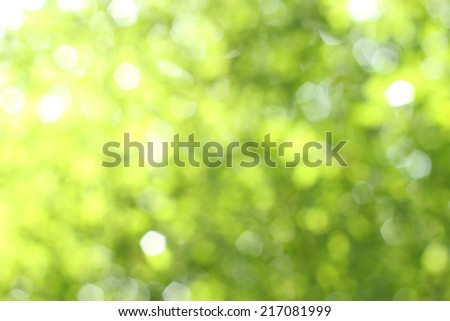 Backgroud blur effect by the nature light - stock photo