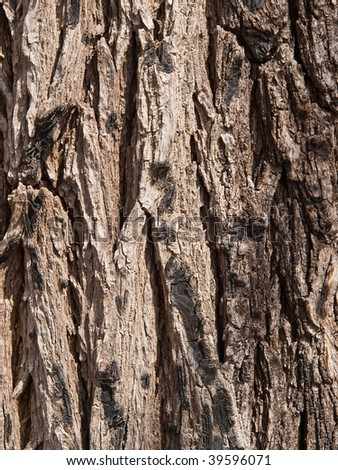 Background a bark of an old dark grey tree - stock photo