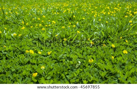 Background a green field of a grass - stock photo