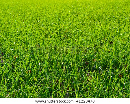 Background a green juicy field of a grass - stock photo