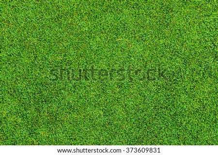 Background and texture of Beautiful green grass pattern from golf cour - stock photo