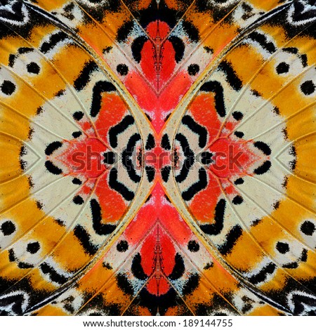 Background and texture of Leopard Lacewing butterfly's wing.(Cethosia cyane) - stock photo