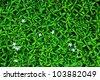 Background at the plant Gerdenia Crape Jasmine  Gardenia jasminoides - stock photo