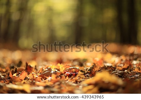 background autumn leaves in the park, nature - stock photo