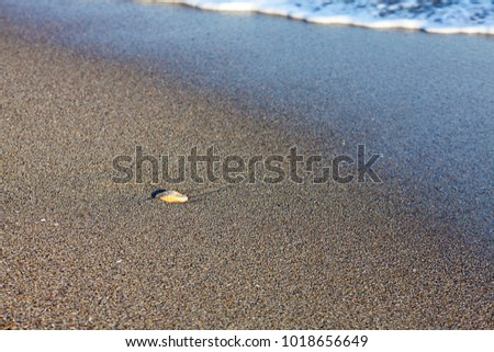 Background beach with waves of the sea and sand